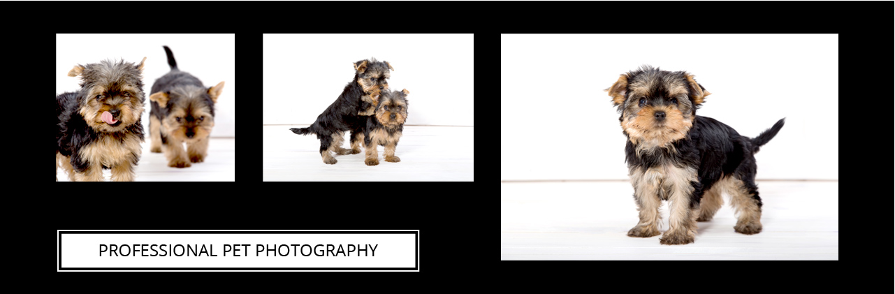 Professional Pet Photo Shoot In Bristol Snappy Snaps